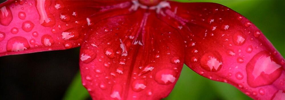 Petals by Sebastian Sayegh