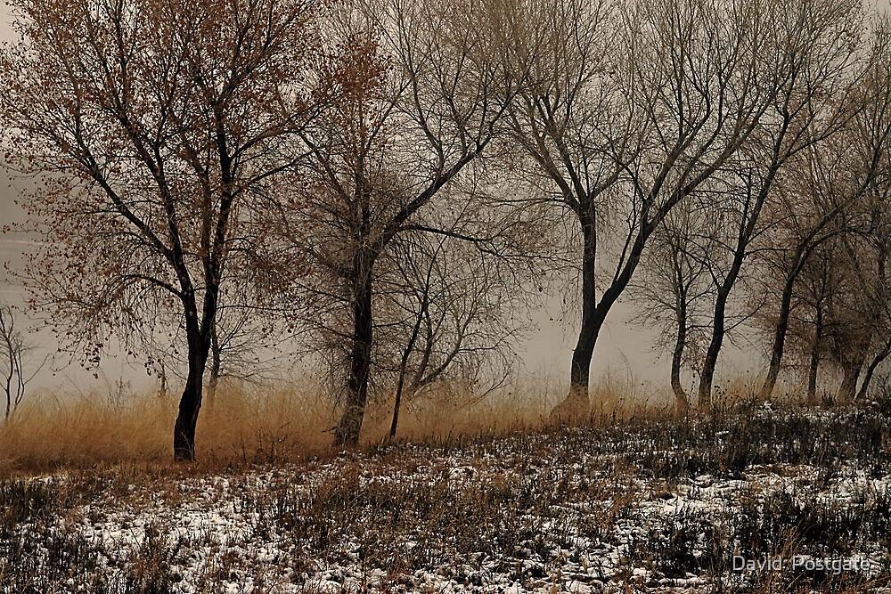 Cottonwoods 2 by David  Postgate