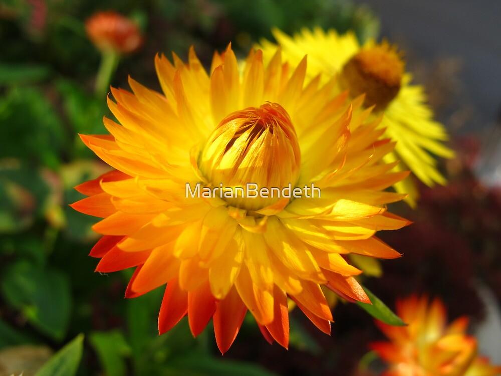 Fire Orange by MarianBendeth