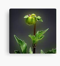Soon I'll Be A Beautiful Flower Canvas Print
