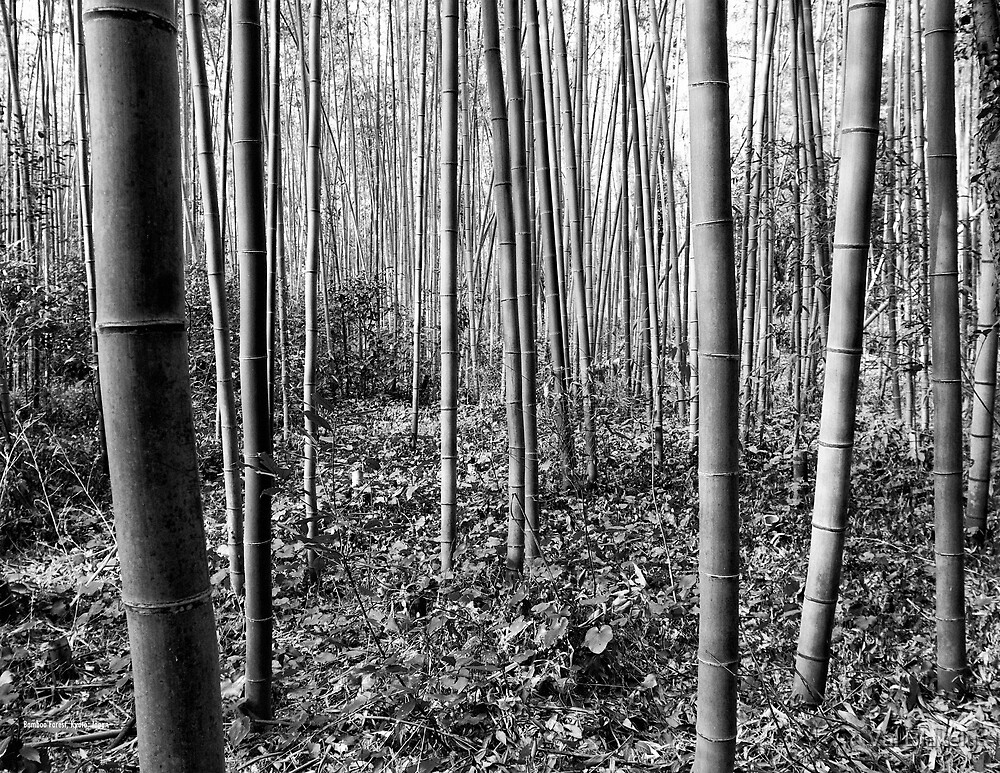 Bamboo Forest by Val Blakely