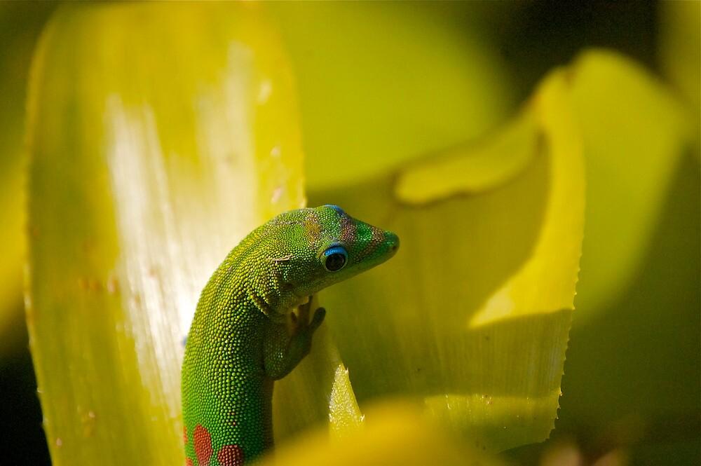 Gecko by Sebastian Sayegh
