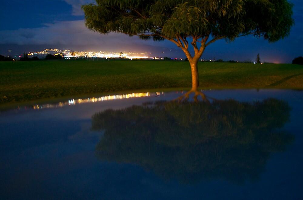 Tree by Sebastian Sayegh