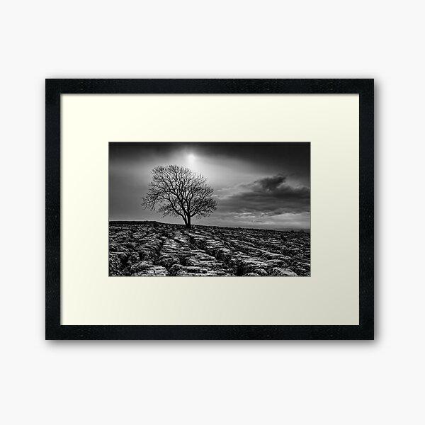 Malham Tree 02 - Yorkshire Dales, UK Framed Art Print