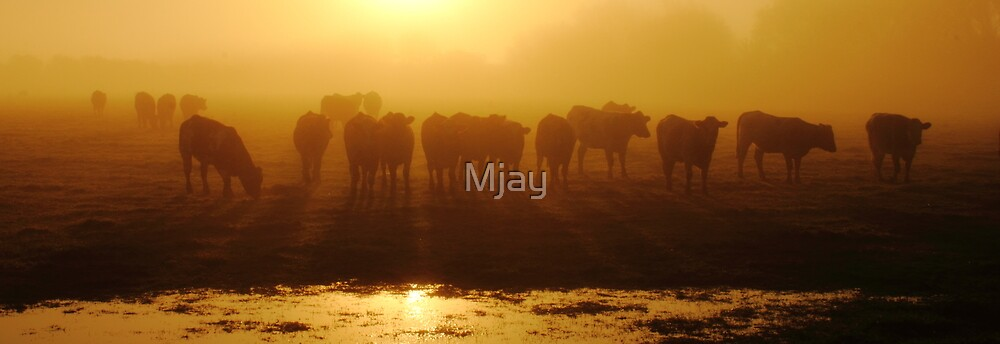 Cows Mist by Mjay