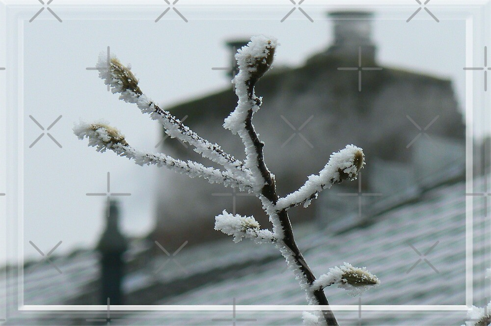 the frosty the buds! by LisaBeth