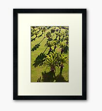 Palms backlit by the evening sun Framed Print
