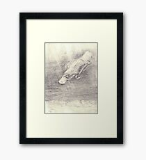 Platypus sketch - pencil Framed Print