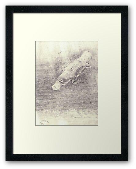Platypus sketch - pencil by gogston