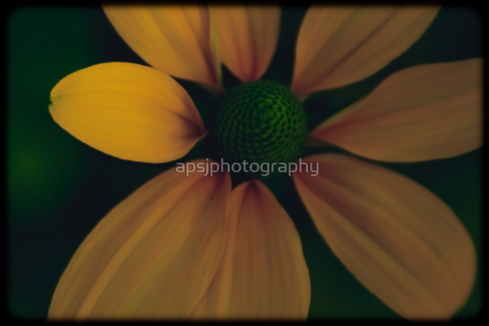 Yellow flower by apsjphotography