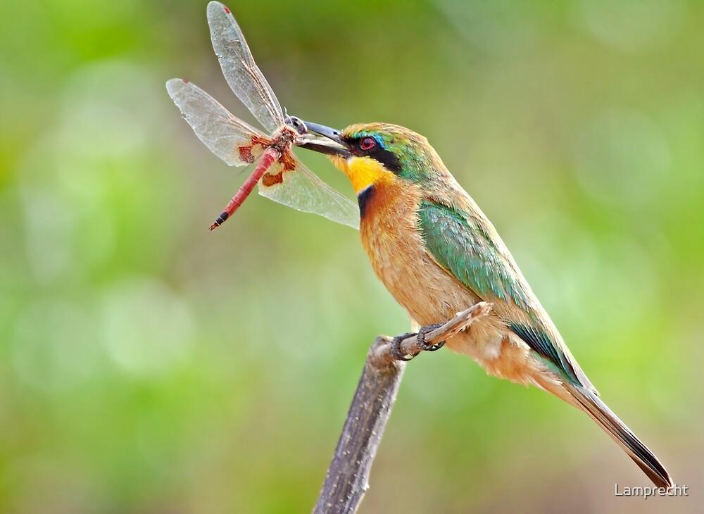 Little Bee-eater by Lamprecht