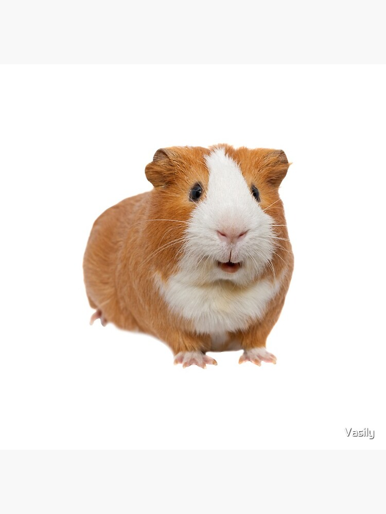 red guinea pig by Vasily