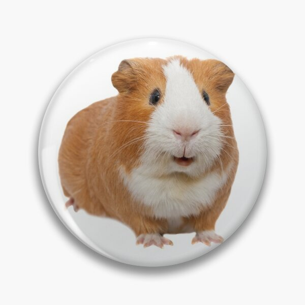 red guinea pig Pin