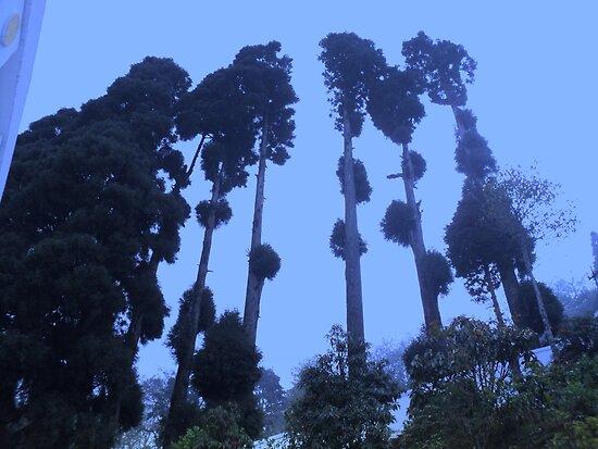 Blue Sky by Prem Pawar