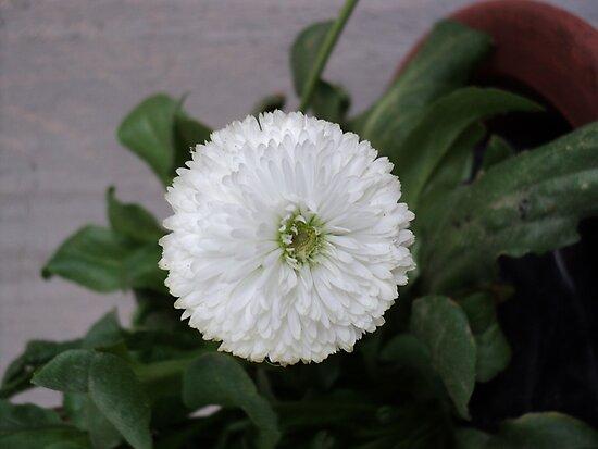 White... by Prem Pawar