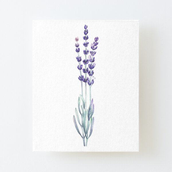 Watercolor lavender Canvas Mounted Print