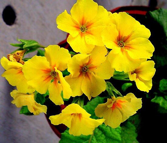 Yellow...F by Prem Pawar