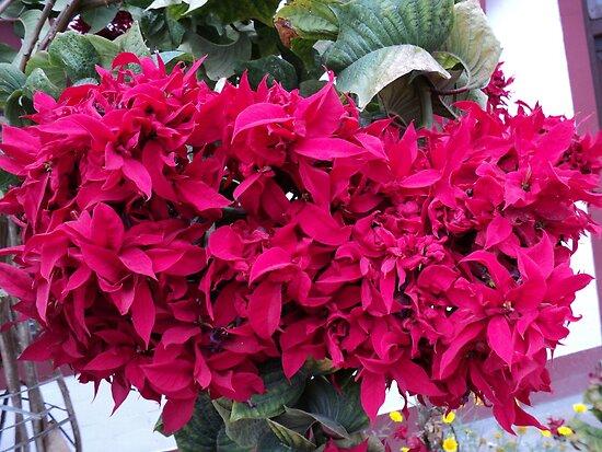 REd...!!! by Prem Pawar