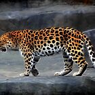Leopard by Marija