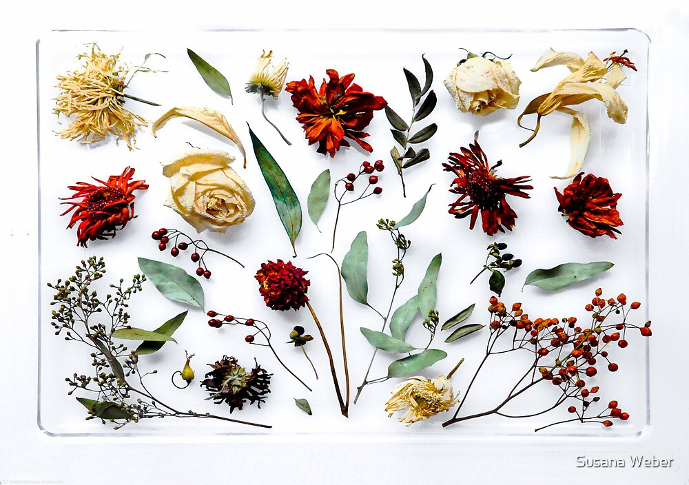 Christmas Botanical (Card Format) by Susana Weber
