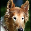 RIP Lassie Girl by Angie O'Connor