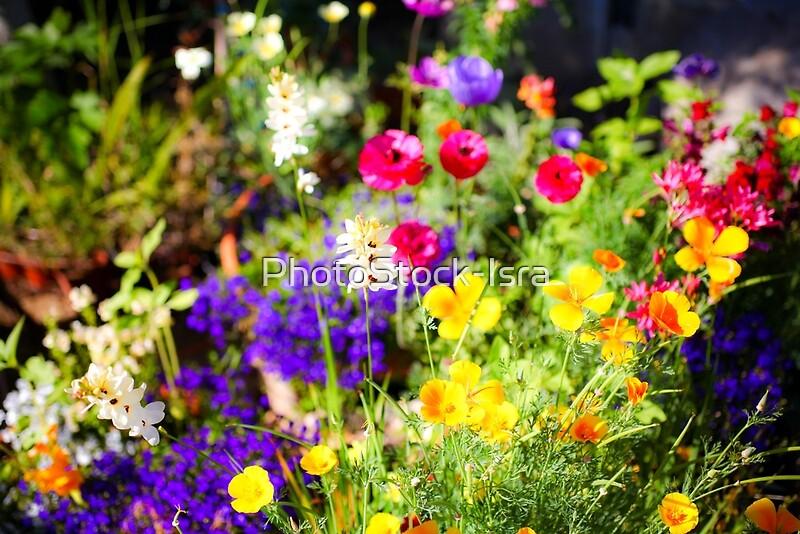 Flowering Garden Yellow And Purple Blooming Flowers