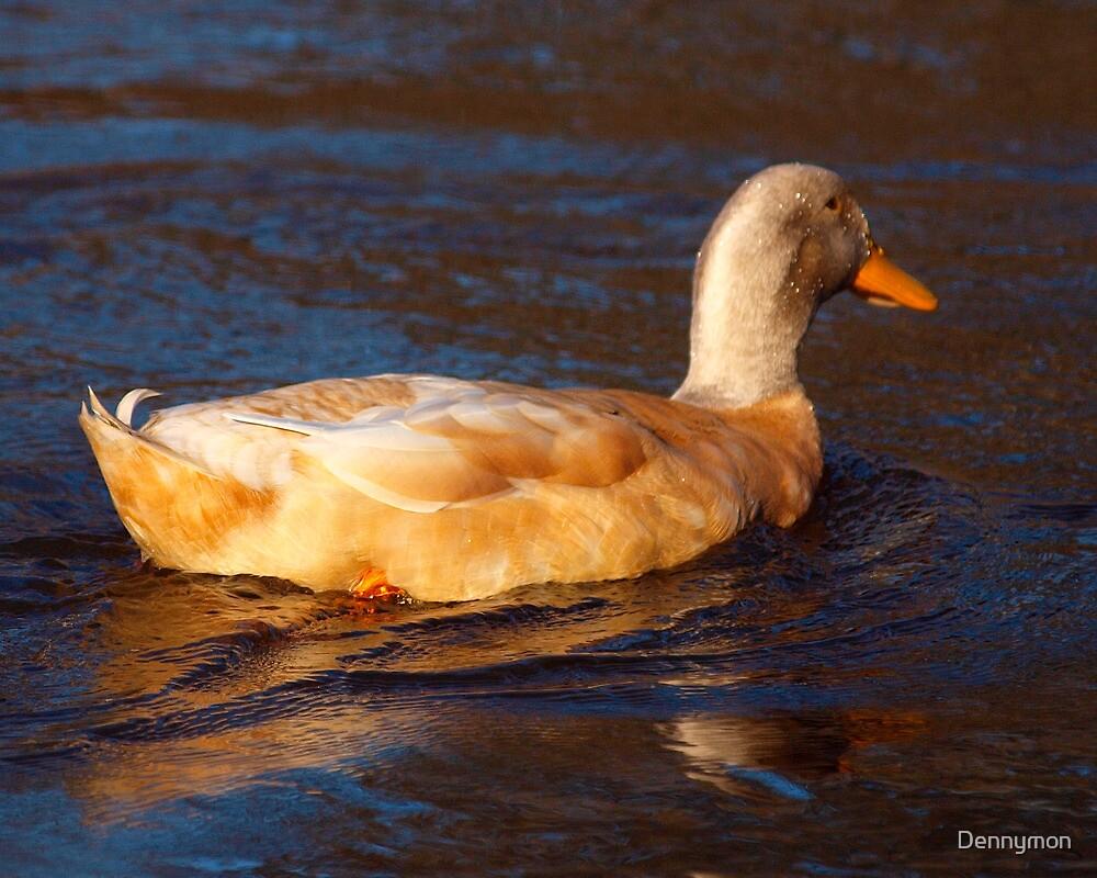 A Pretty Duck by Dennymon