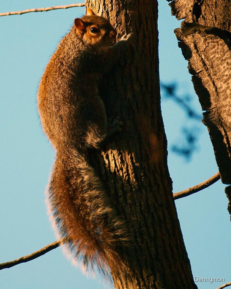 Sunset Squirrel by Dennymon