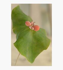 Natural piercing Photographic Print