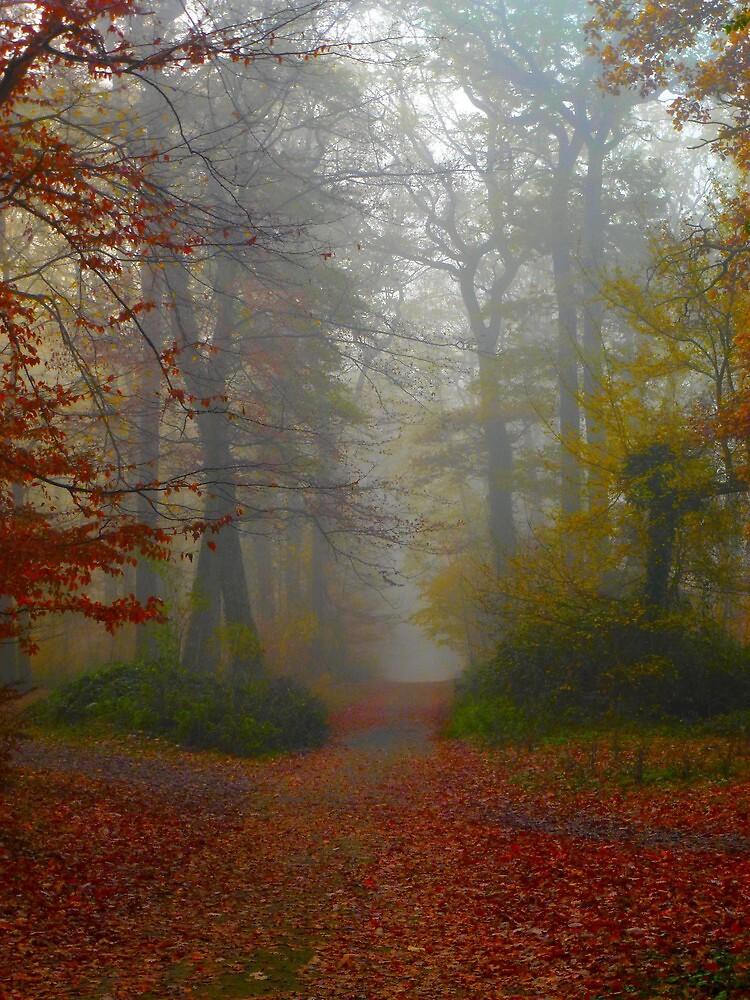 autumn fog by supergold