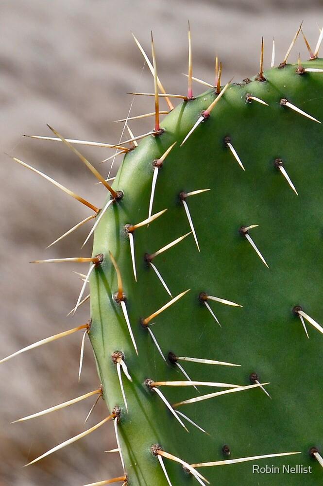 Hawaii cactus by Robin Nellist