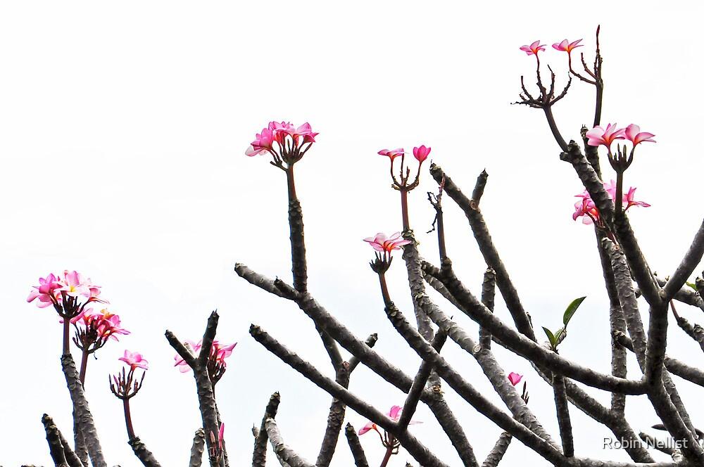 Plumeria by Robin Nellist
