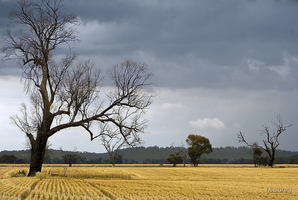 Crop off just in time! by nealbrey