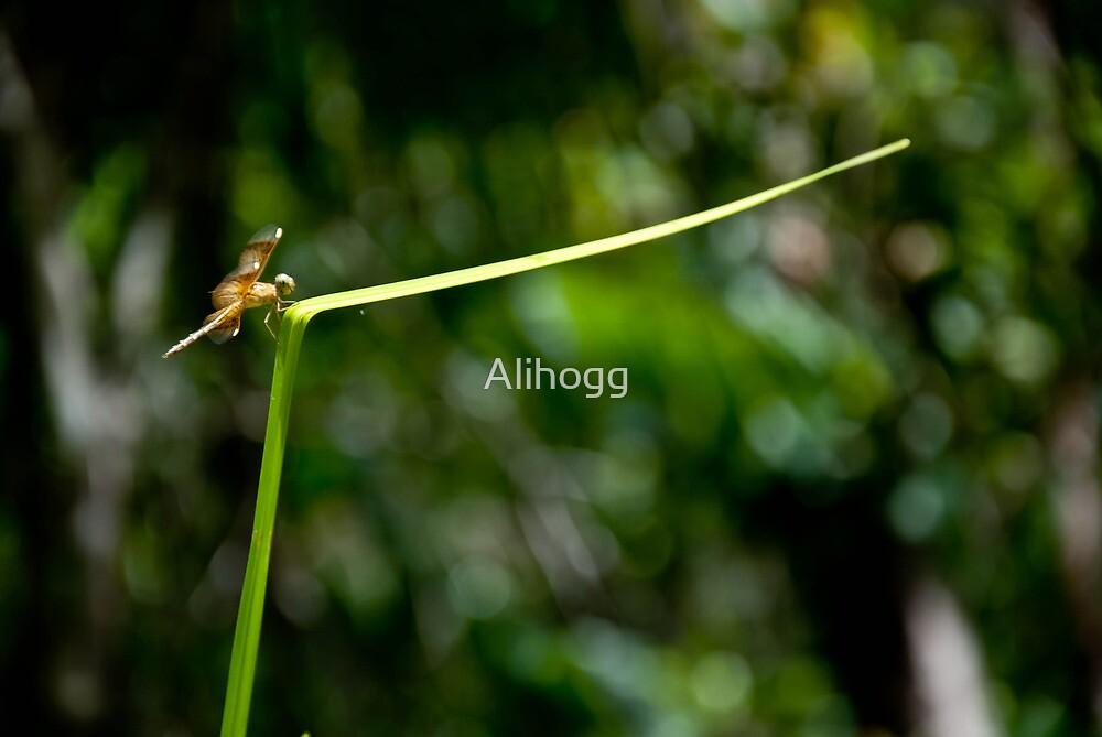 walking on a thin line by Alihogg