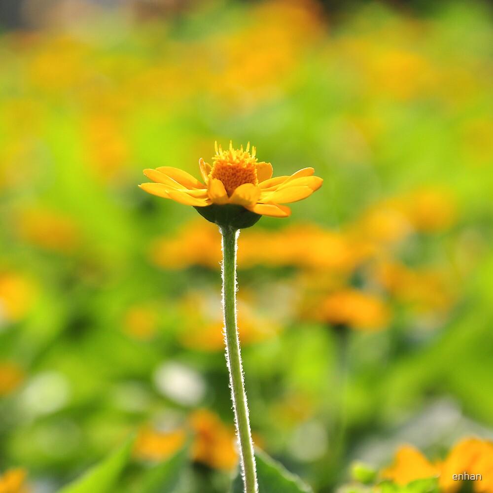 Yellow spring flower and surrounding yellow by Van Nhan Ngo
