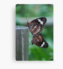 Mating Butterflies Canvas Print