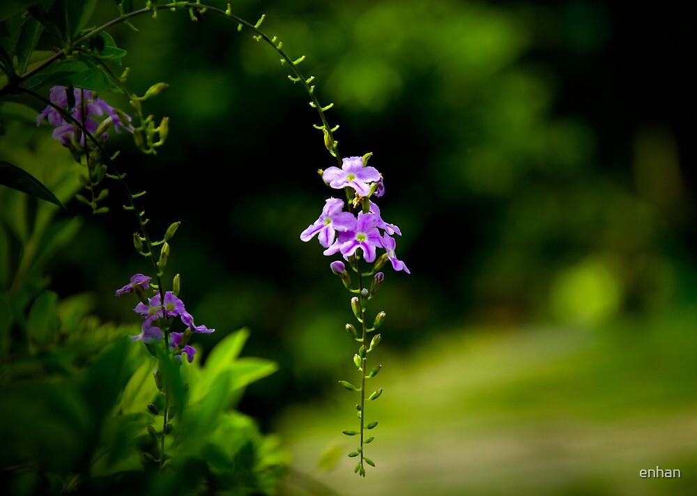 Purple flower by Van Nhan Ngo