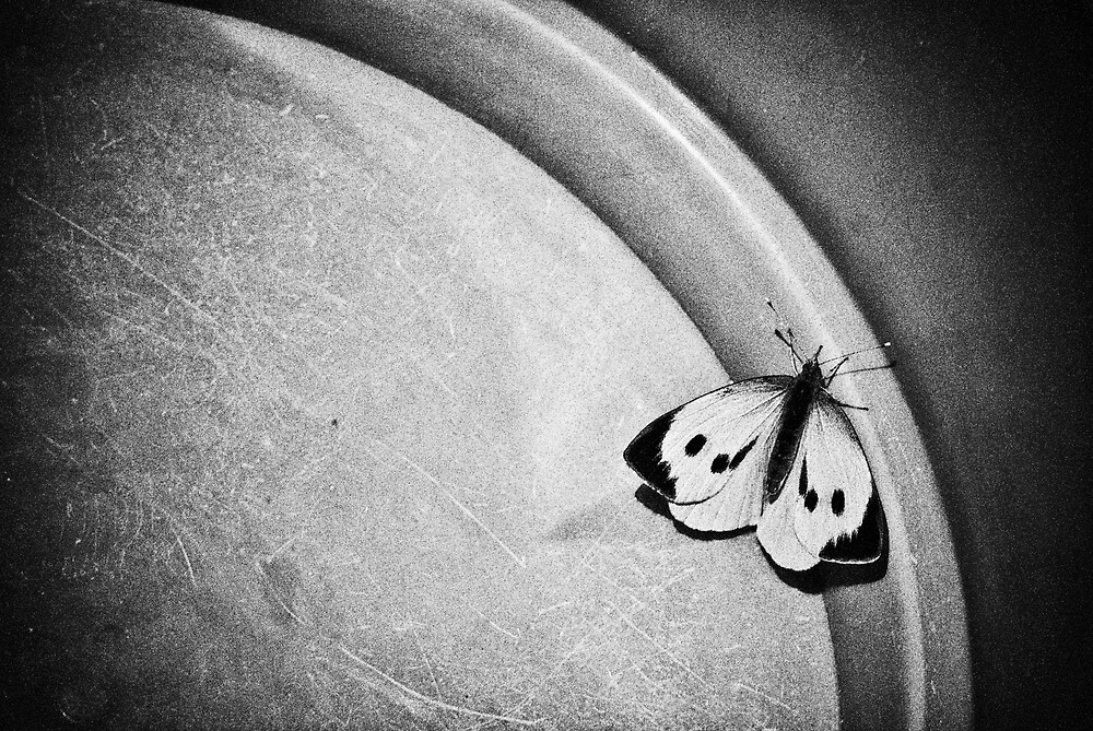 Butterfly by Thefotolion