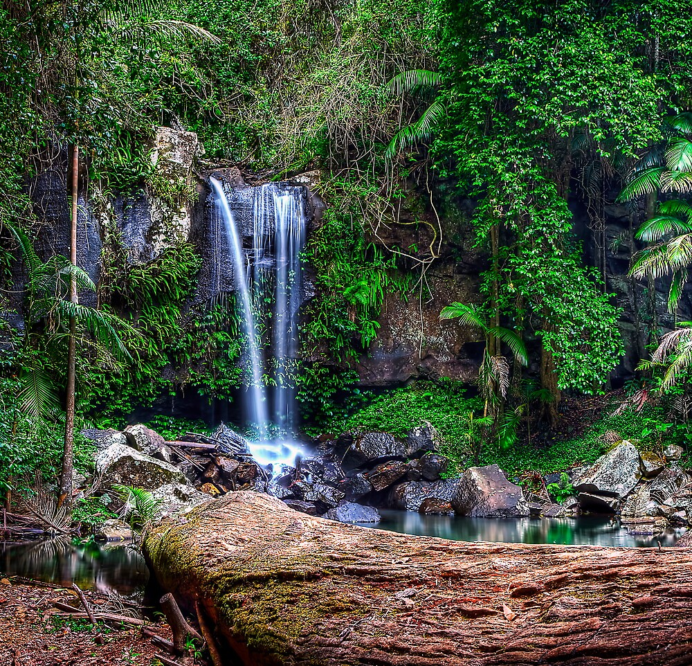 Curtis Falls - Mt Tamborine by Maxwell Campbell