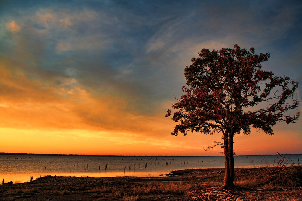 Sunset And The Tree by Carolyn  Fletcher