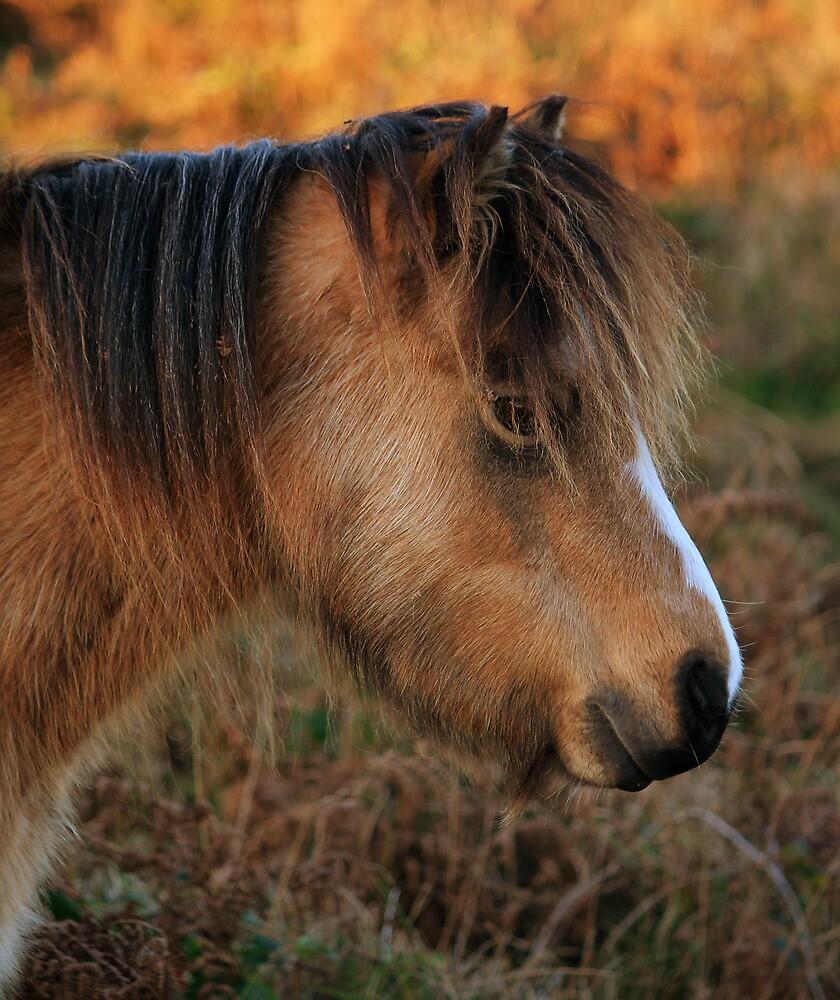 Pony by Anthony Thomas