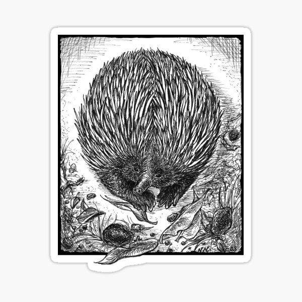 Echidna Ink Drawing by Nadya Neklioudova Sticker