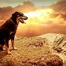 Bella my Rottweiler by Smudgers Art