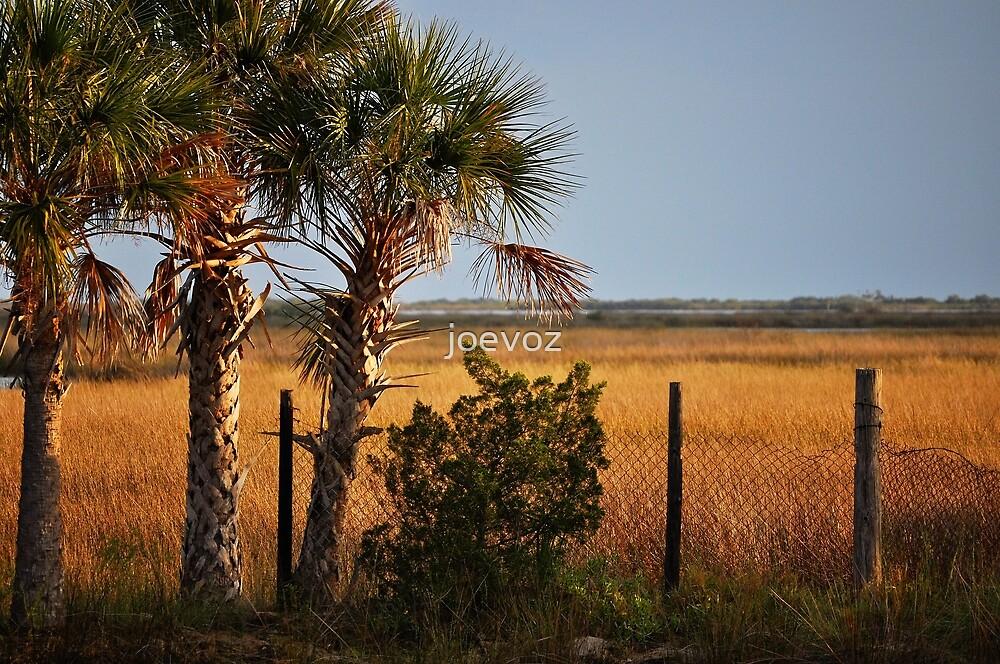 Palm Tree On Coast by joevoz