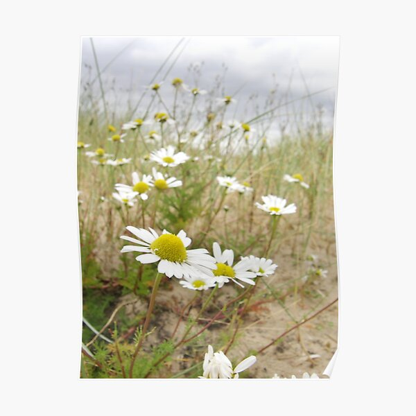 White n Yellow Lisfannon beach County Donegal Ireland Poster