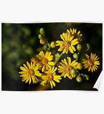 Beach Wildflowers Poster