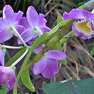 Purple Orchid  by Virginia McGowan