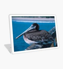 Brown Pelican Resting on the Docks Laptop Skin