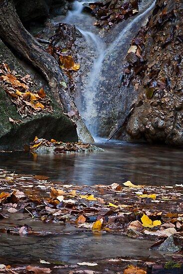 Still Waters by Davide Ferrari