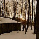 Cold Wanderer by Jessica Bradford